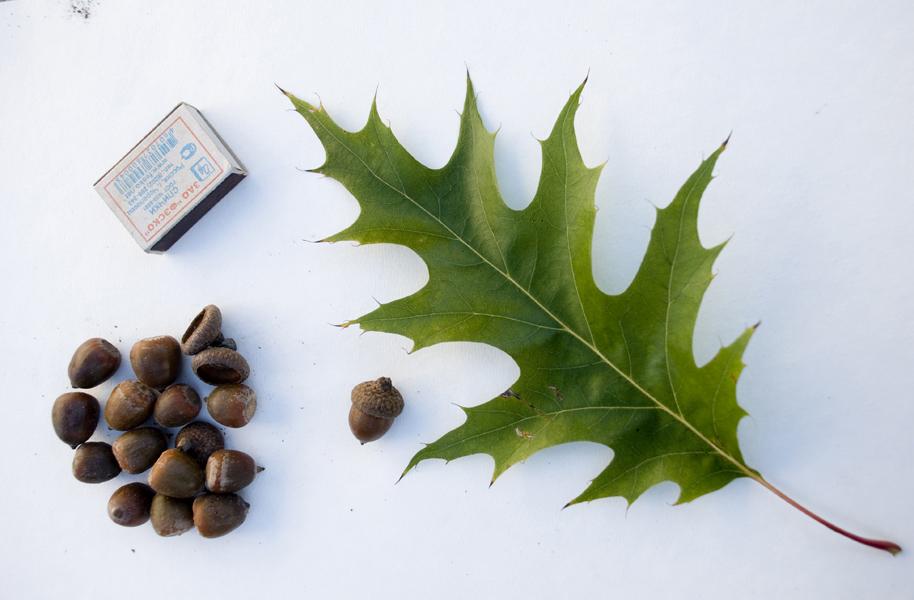 Рецепт хрустящих огурцов на зиму Огурцы с дубовыми